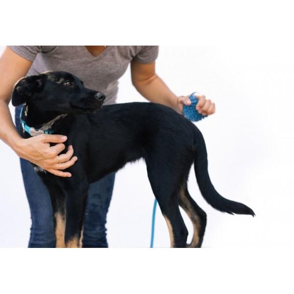 Aquapaw-Λάστιχο γάντι για την καθαριότητα του σκύλου σας!